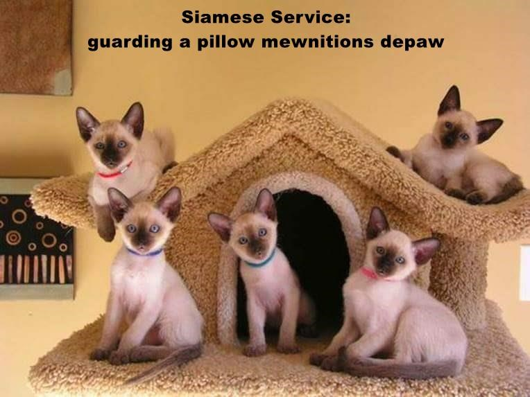 Siamese Service:                                                                                                guarding a pillow mewnitions depaw