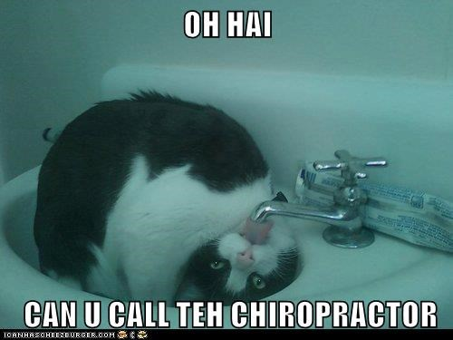 call can Caturday caption oh hai chiropractor