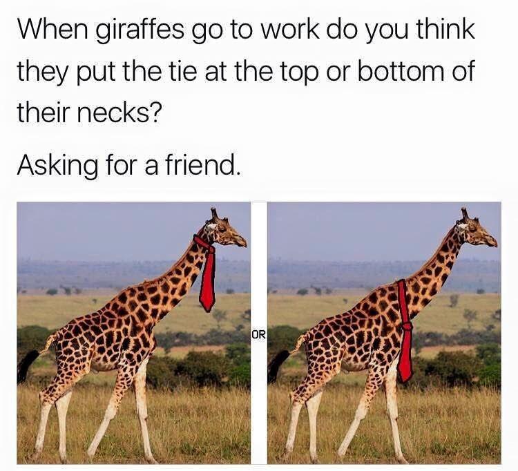 tie giraffes image - 8992714496