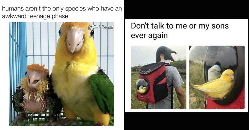 Funny memes about birds