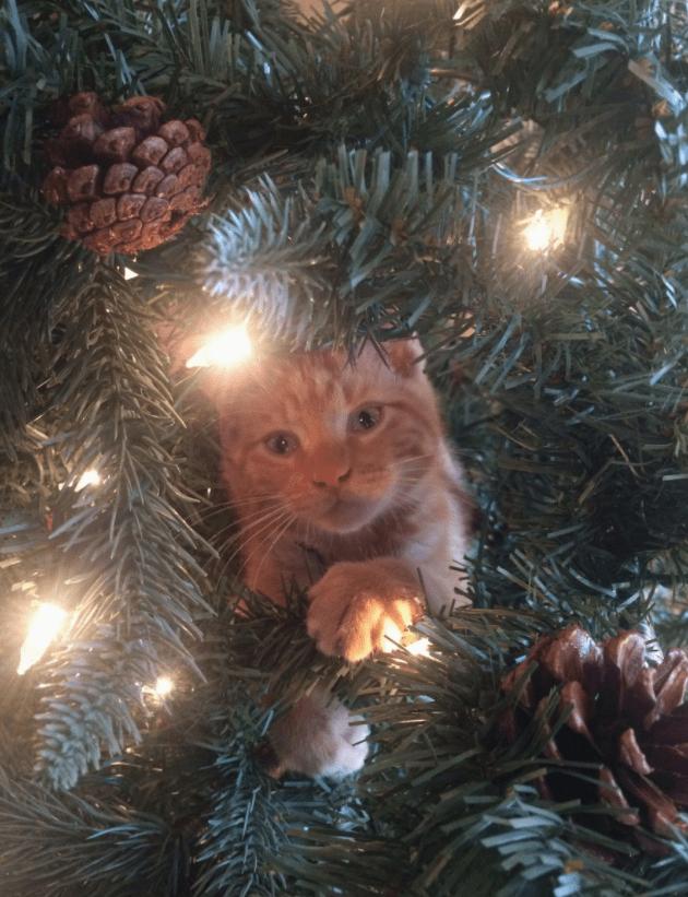 christmas,christmas trees,tree,Cats
