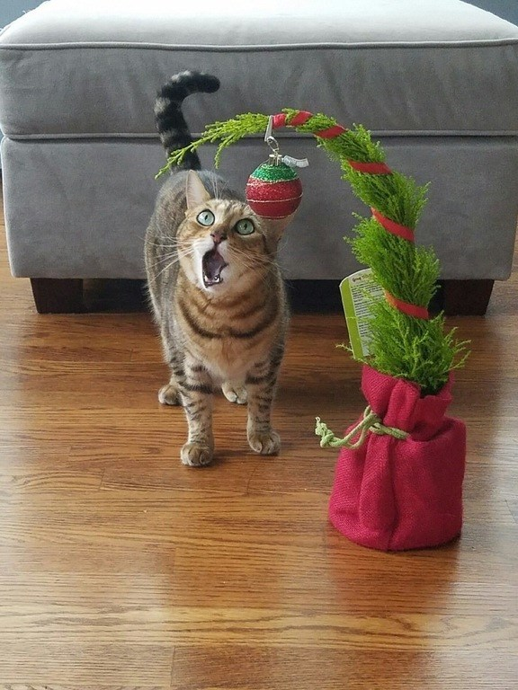 cat with a mini christmas tree