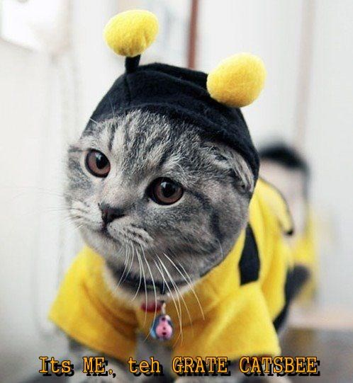 Its ME, teh GRATE CATSBEE