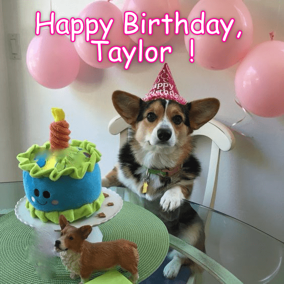 Funny picture of a dog named Taylor having a birthday party.