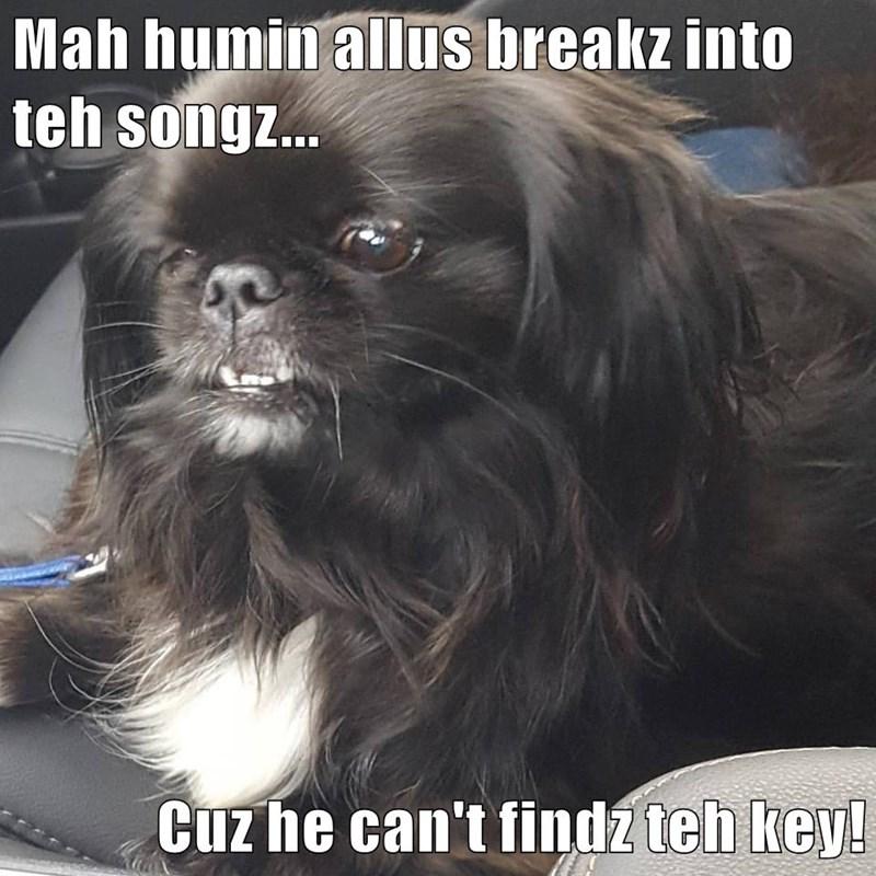 Mah humin allus breakz into teh songz...  Cuz he can't findz teh key!
