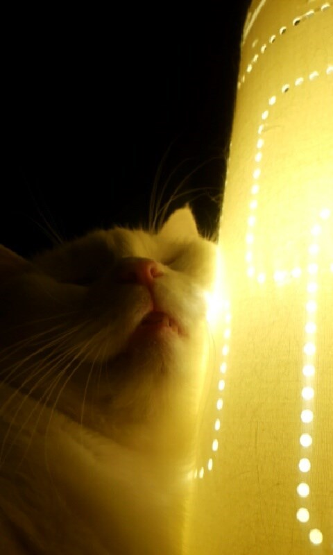 lamp Cats warm - 8993138432