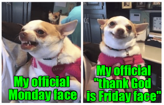 dogs face FRIDAY caption official monday - 8993153024