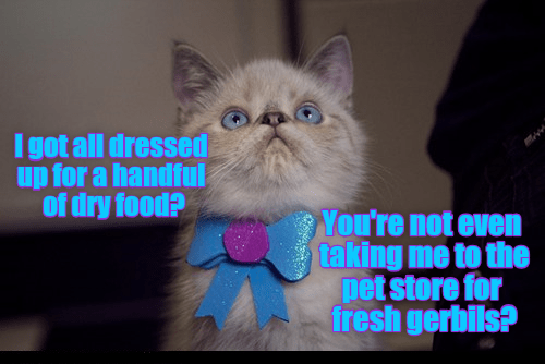 cat,gerbils,dry food,caption,dressed up,pet store