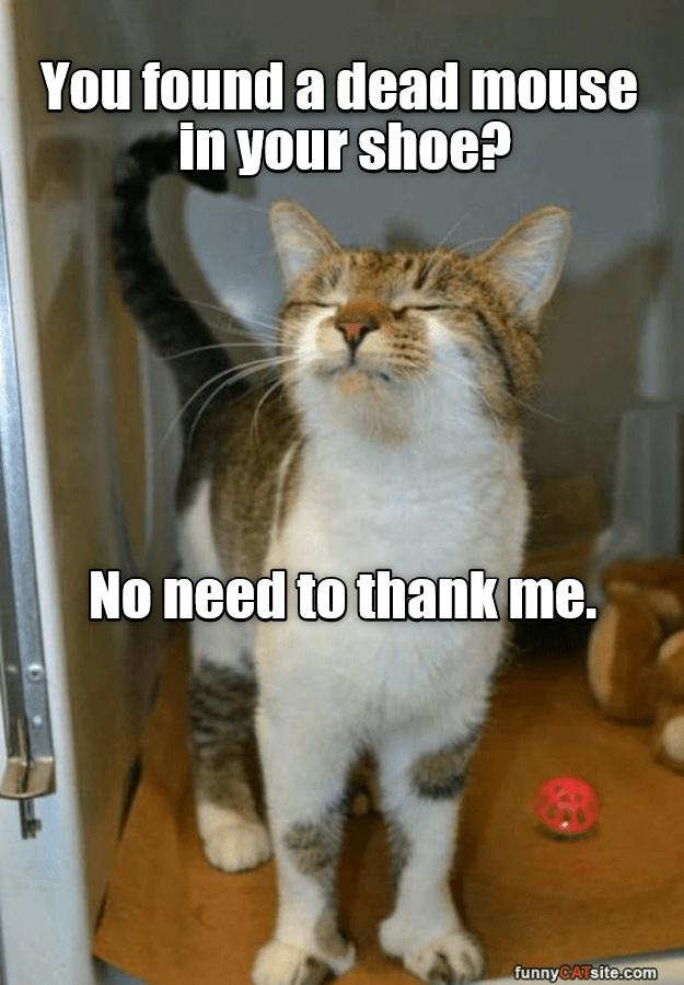 No need to thank me.