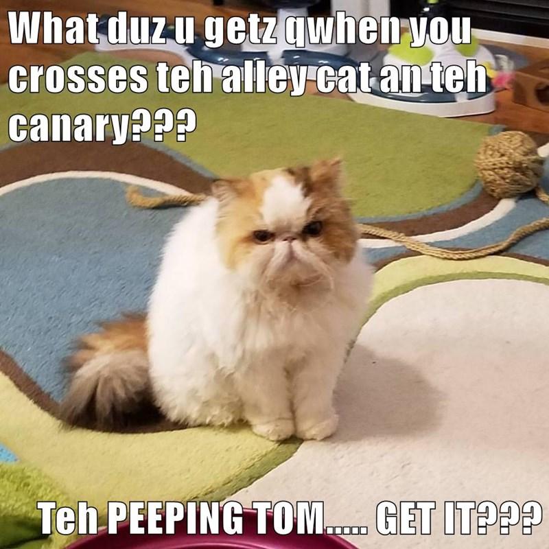 Kitty puns