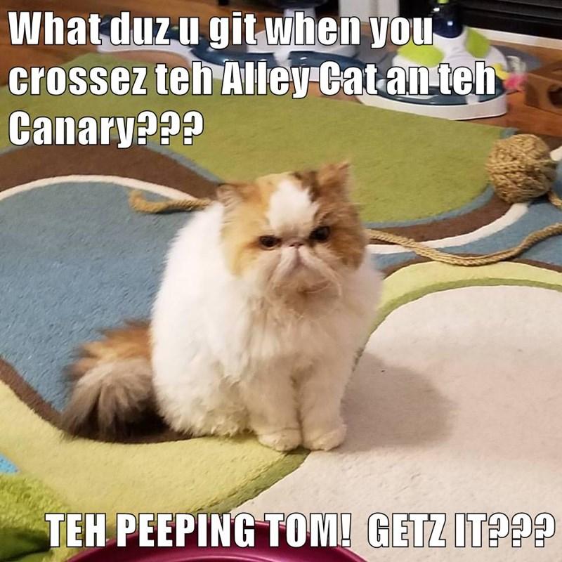 cat meme puns tweet - 8993217536