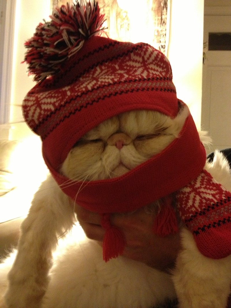 scarf,cold,Cats,hat