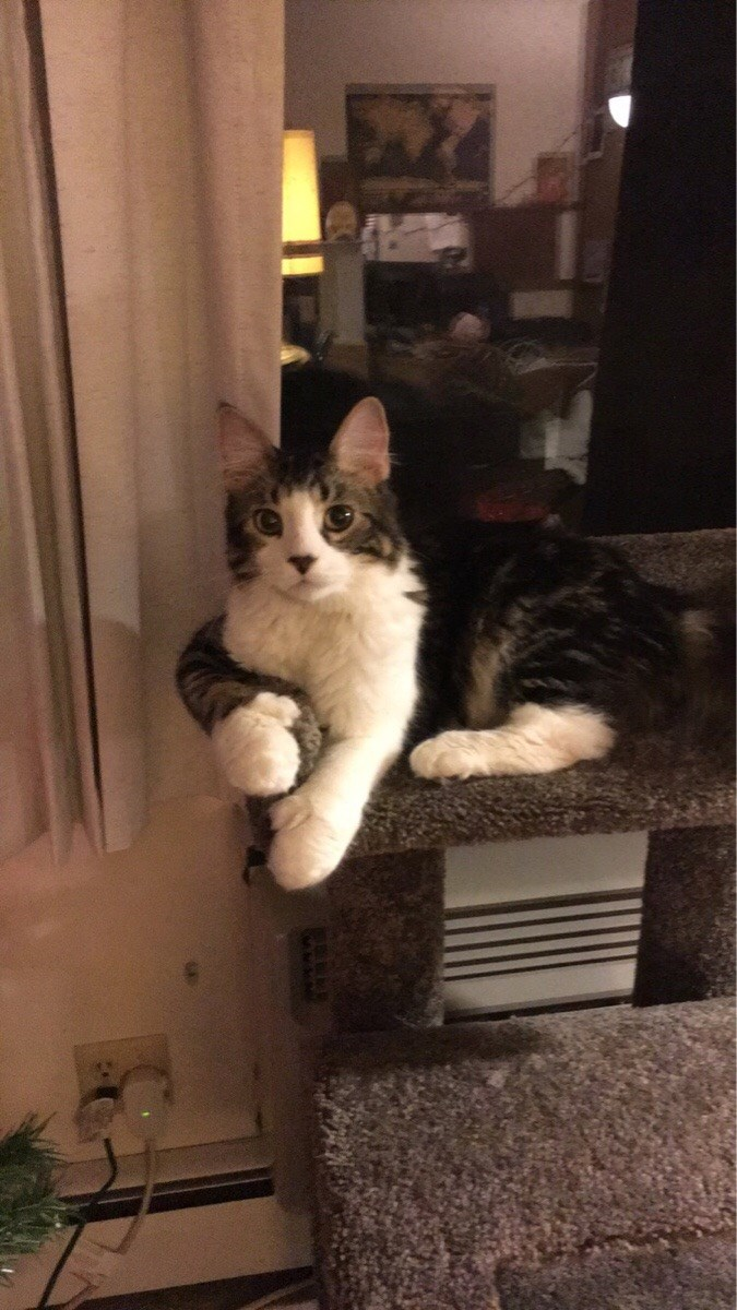 mittens paws Cats - 8993320960