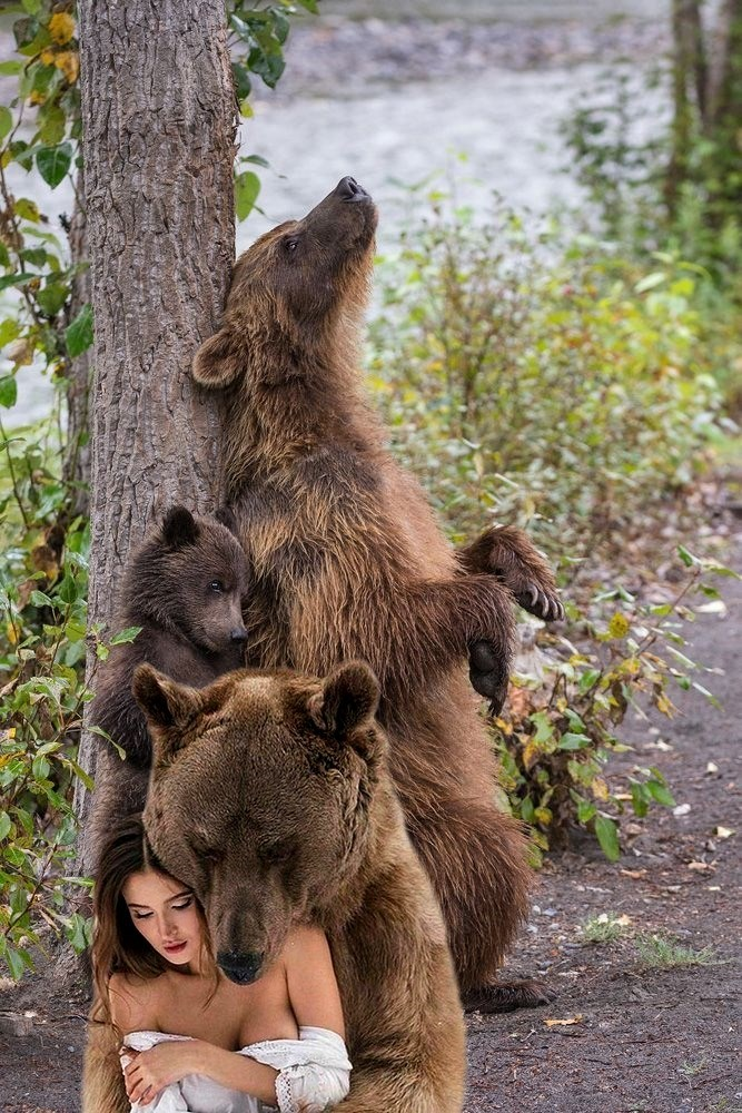 bearly-covered