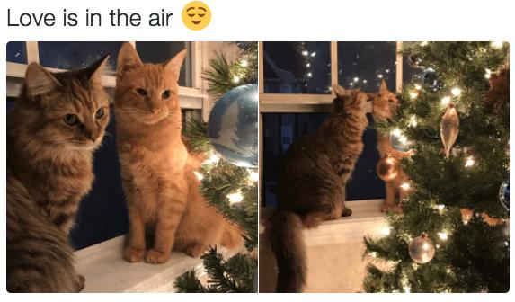 Christmas Kitty Kisses