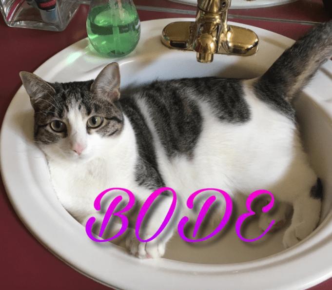 Cat - PODE