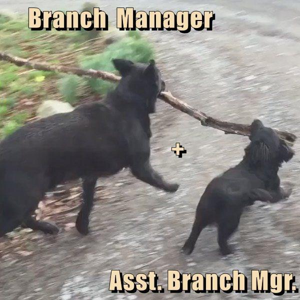 Branch  Manager             + Asst. Branch Mgr.