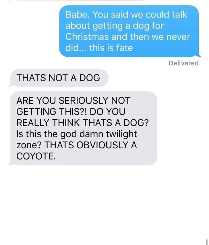 Text - Babe. You said we could talk about getting a dog for Christmas and then we never did... this is fate Delivered THATS NOT A DOG ARE YOU SERIOUSLY NOT GETTING THIS?! DO YOU REALLY THINK THATS A DOG? Is this the god damn twilight zone? THATS OBVIOUSLY A COYOTE