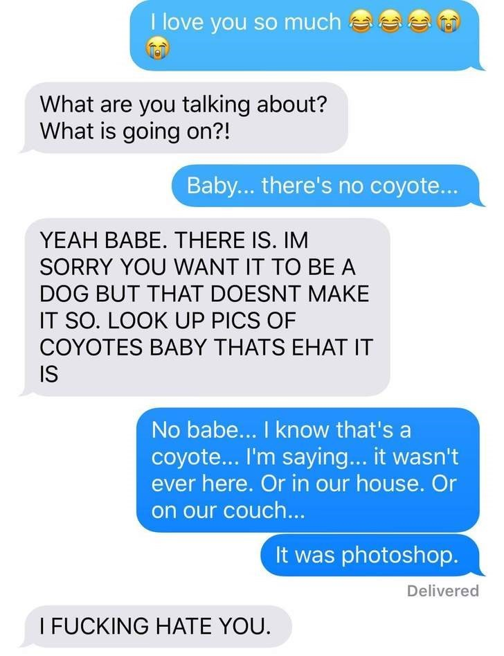 Text - I love you so much What are you talking about? What is going on?! Baby... there's no coyote... YEAH BABE. THERE IS. IM SORRY YOU WANT IT TO BE A DOG BUT THAT DOESNT MAKE IT SO. LOOK UP PICS OF COYOTES BABY THATS EHAT IT IS No babe... I know that's a coyote... I'm saying... it wasn't ever here. Or in our house. Or on our couch... It was photoshop. Delivered I FUCKING HATE YOU.