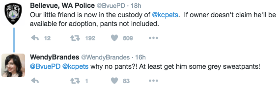 Text - FOLTEBellevue, WA Police @Bvue PD 18h Our little friend is now in the custody of @kcpets. If owner doesn't claim he'll be available for adoption, pants not included 12 t 192 609 WendyBrandes@WendyBrandes 16h @BvuePD @kcpets why no pants?! At least get him some grey sweatpants! t1 83