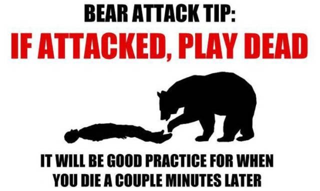 tips bears trolling image - 8993660160