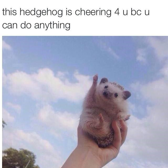 wholesome Memes hedgehog - 8993661696