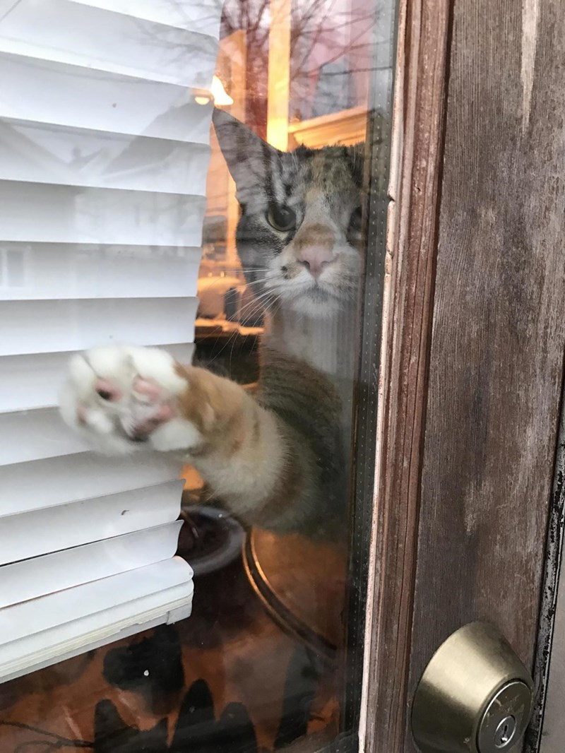Cats,window
