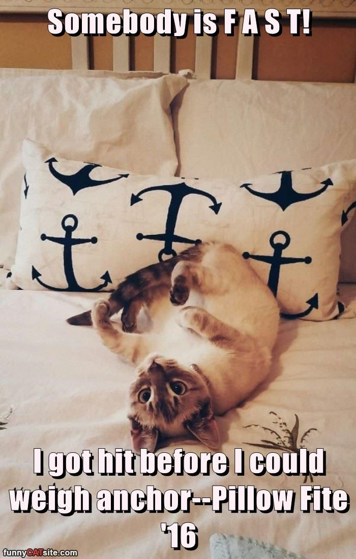 Somebody is F A S T!  I got hit before I could weigh anchor--Pillow Fite '16