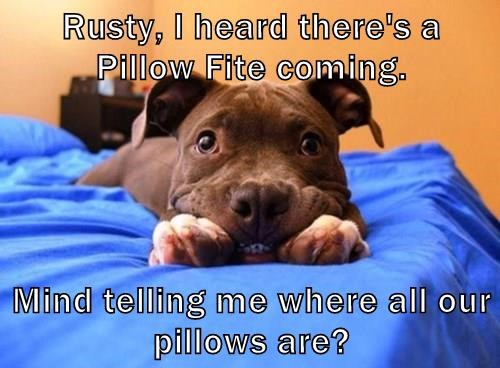 Rusty, I heard there's a Pillow Fite coming.   Mind telling me where all our pillows are?