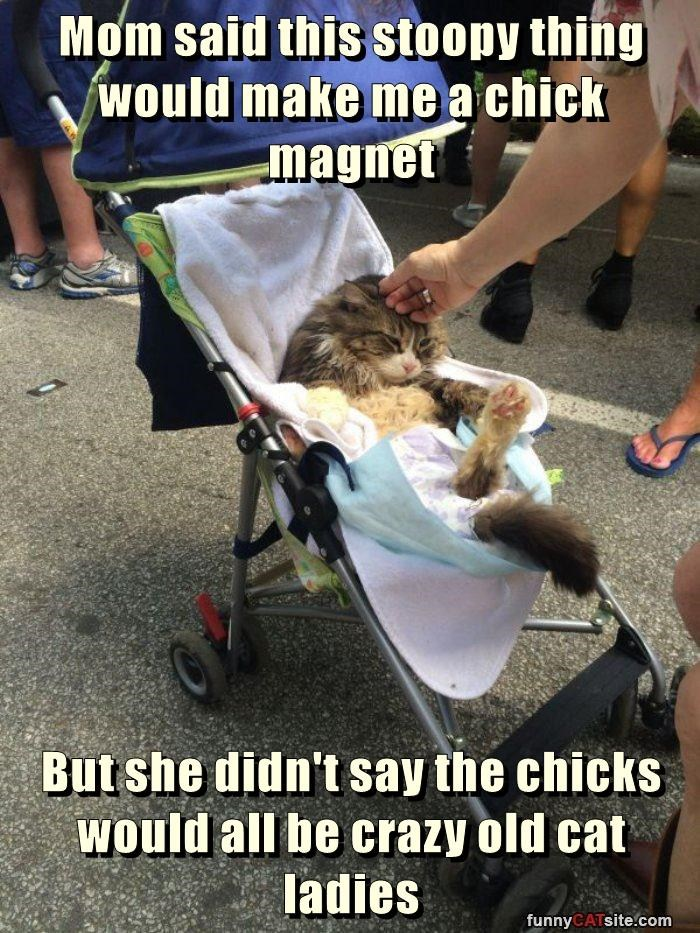 Mom said this stoopy thing would make me a chick magnet  But she didn't say the chicks would all be crazy old cat ladies