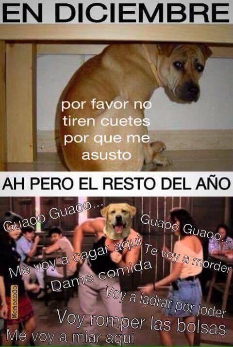 bromas Memes animales - 8993840384