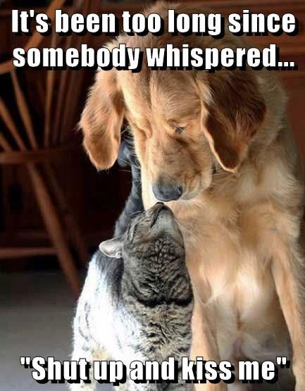 shut up,too long,cat,dogs,whispered,caption,somebody,kiss me