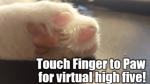 cat cat meme paw high five - 8993850368