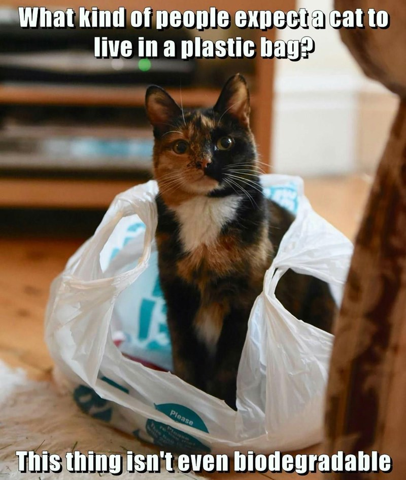 isnt,live,cat,biodegradable,plastic bag,caption