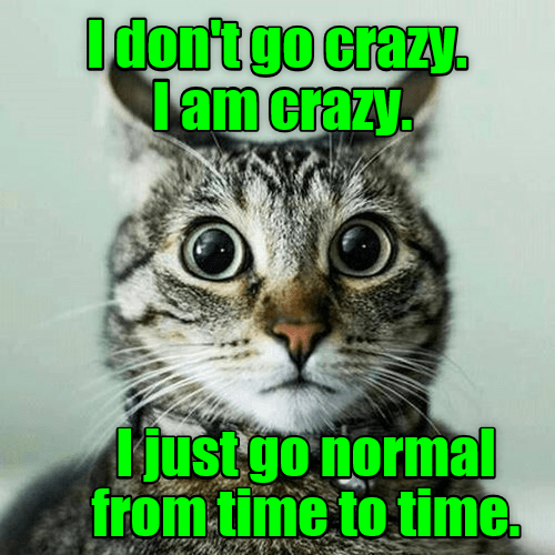 crazy cat go caption normal am - 8993895680