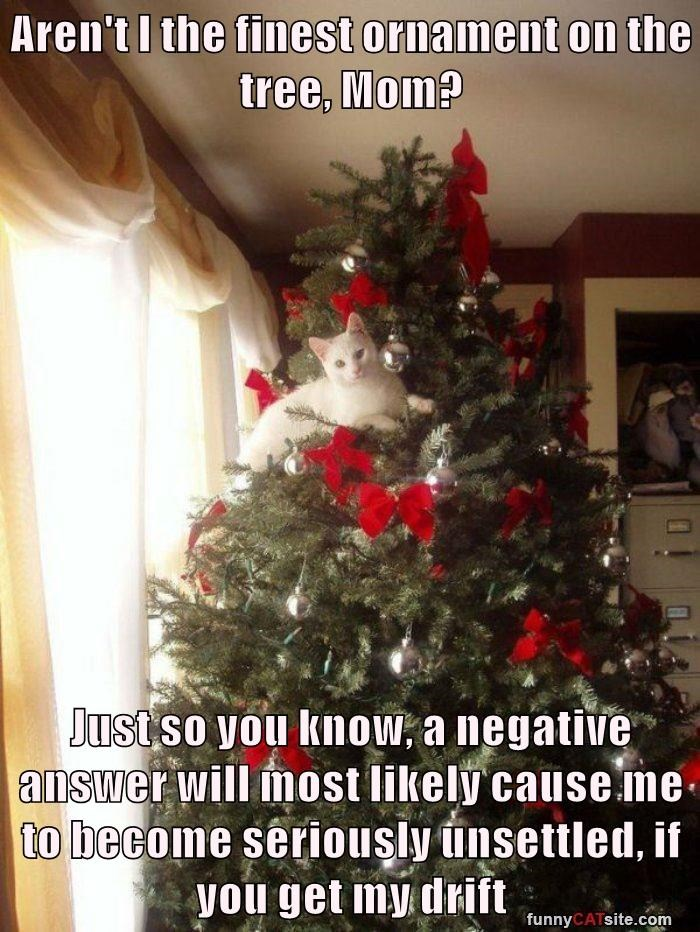 cat,finest,ornament,tree,caption