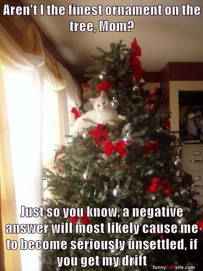cat tree caption - 8993941760