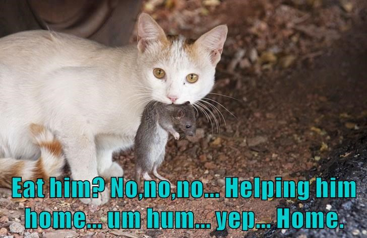 cat eat him caption no home helping - 8993949184