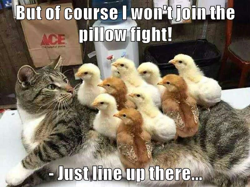 But of course I won't join the pillow fight!   - Just line up there...