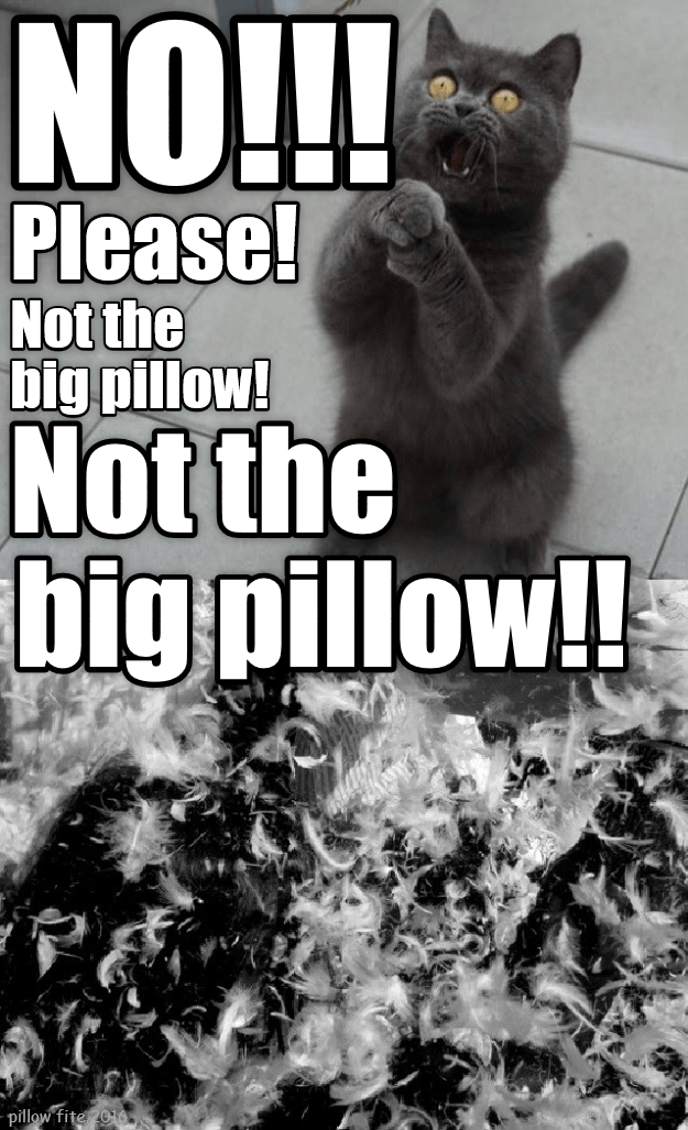 Pillow cat not big caption no - 8993964544