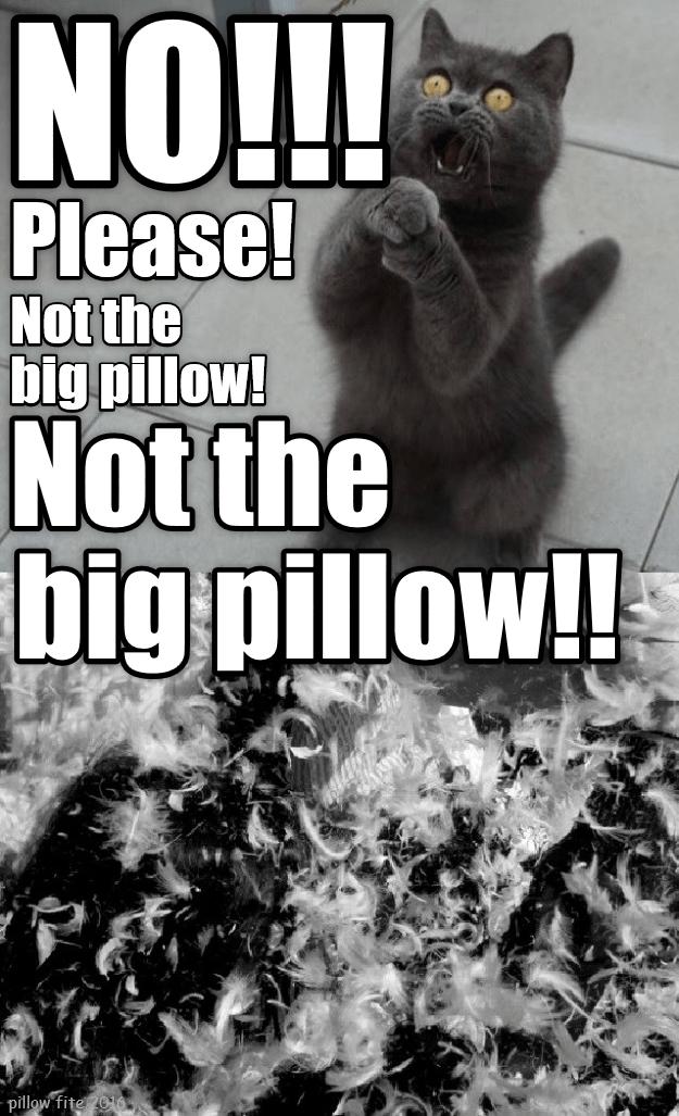Pillow cat not big caption no - 8993964544