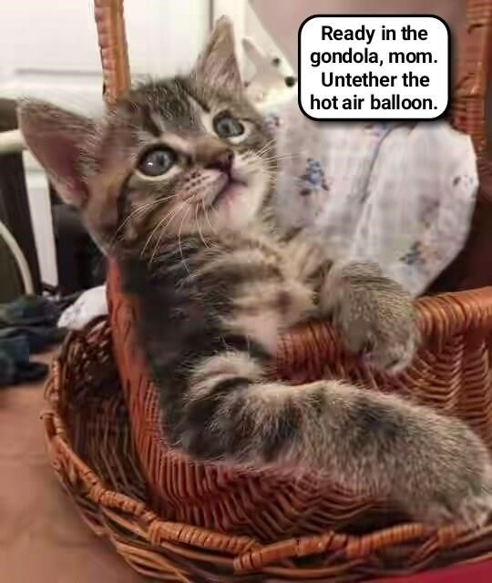 Bwave asplorer kitteh prepares for high adventure (recaption: http://tinyurl.com/hjpdg94