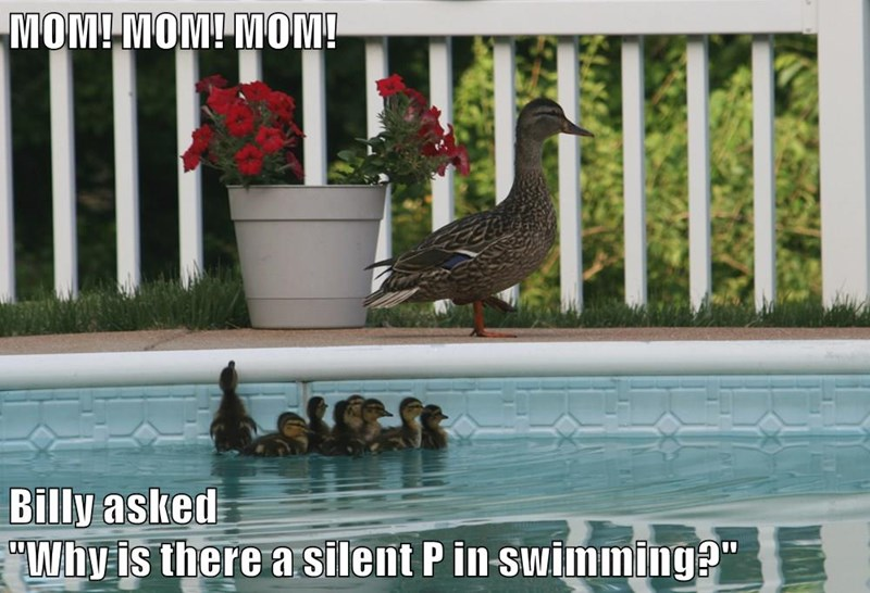 """MOM! MOM! MOM!  Billy asked                                                                             """"Why is there a silent P in swimming?"""""""