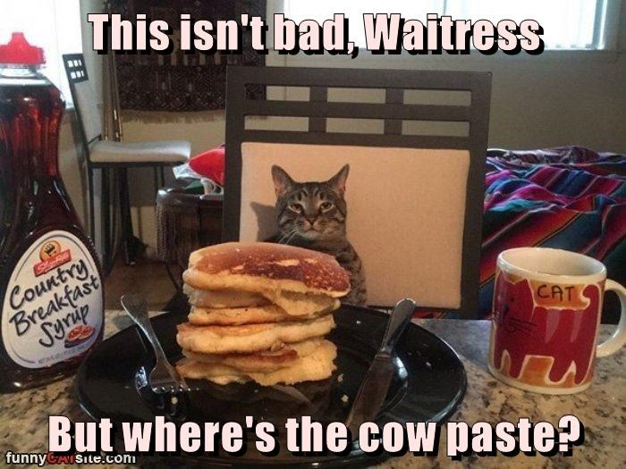 This isn't bad, Waitress  But where's the cow paste?