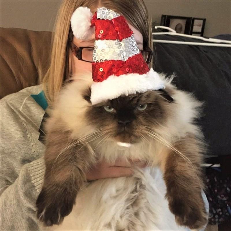 santa hats grumpy Cats - 8994166528