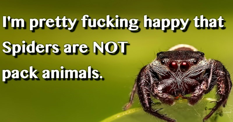 Insect - I'm pretty fucking happy that Spiders are NOT pack animals.