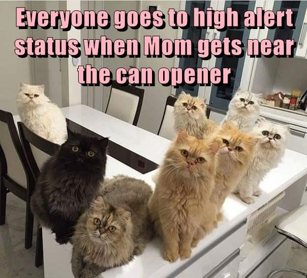 Everyone goes to high alert status when Mom gets near the can opener