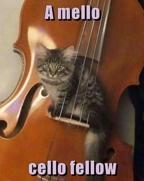 A mello  cello fellow