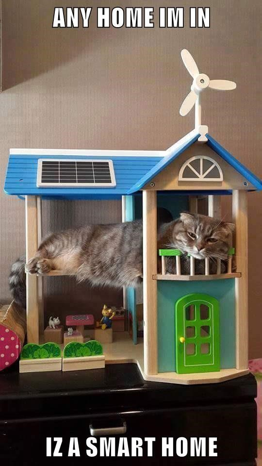 ANY HOME IM IN  IZ A SMART HOME