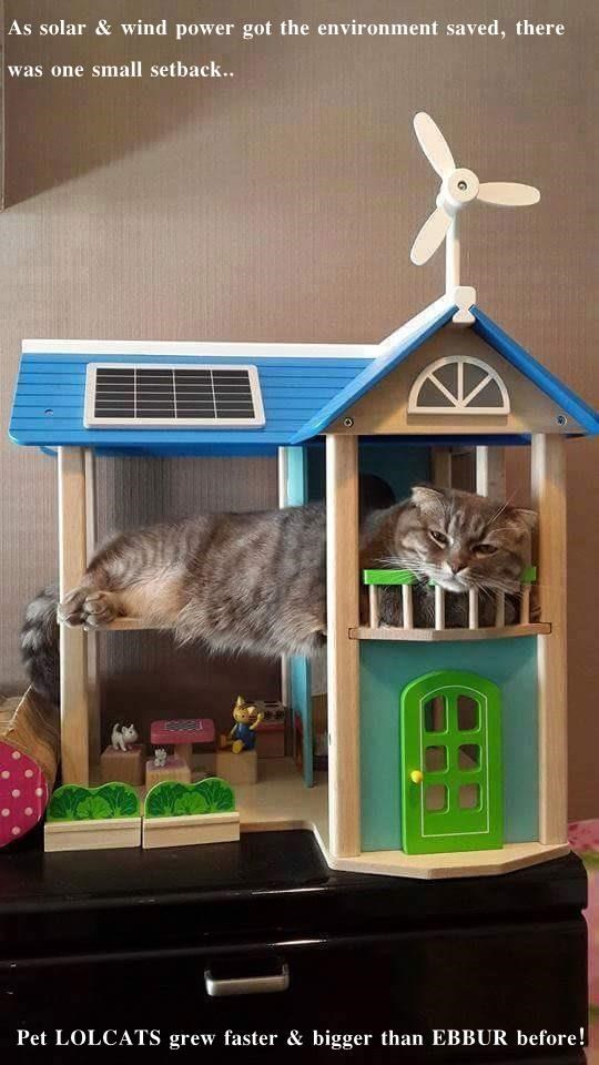 As solar & wind power got the environment saved, there was one small setback..  Pet LOLCATS grew faster & bigger than EBBUR before!